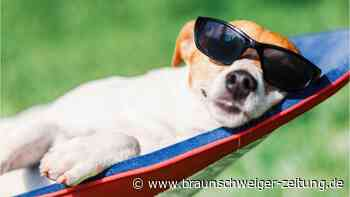 Hund, Katze & Kaninchen: So überstehen sie den Sommer
