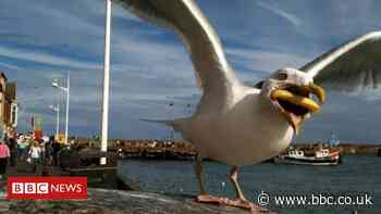 Google buys photographer's shot of seagull eating a chip