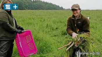 Ennepetal: Fehlverhalten gefährdet Rettung von Rehkitzen - Westfalenpost