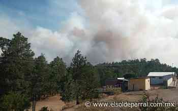 [Video] Arde Sierra Tarahumara en Guadalupe y Calvo - El Sol de Parral
