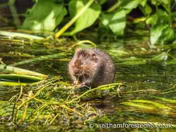 Meet the wildlife wonders of Waltham Forest - Waltham Forest Echo