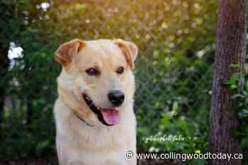 Adopt Me: Meet An Nii Moosh - Collingwood News - CollingwoodToday.ca