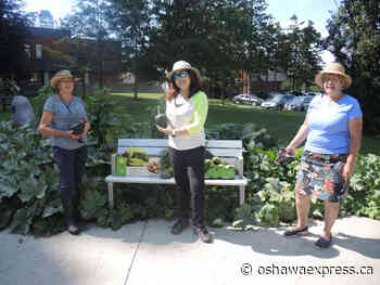 Veggie gardens sprouting for another season at City Hall - Oshawa Express