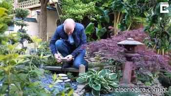 Este hombre transforma su jardín en un impresionante paraíso japonés - elPeriódico (Guatemala)