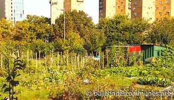 Menace sur les jardins ouvriers d'Aubervilliers : un projet très contesté - Bulletin des Communes