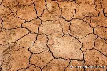Weltwüstentag: Einsatz gegen Dürre und für Ökosysteme - Honnef heute