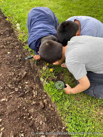Morris Williams Elementary students' radish harvest for The LINK - Burns Lake Lakes District News