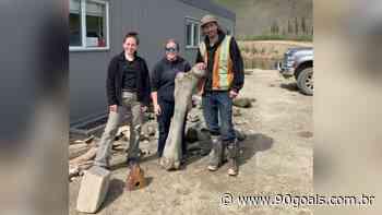 Mineiros de ouro descobrem esqueletos gigantes de três mamutes peludos - 90Goals