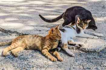 Marsciano: prosegue la sterilizzazione dei gatti randagi « ilTamTam.it il giornale online dell'umbria - Tam Tam