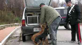 Acerra, maltrattamento animali e abbandono: sequestrati 3 cani - ilmattino.it