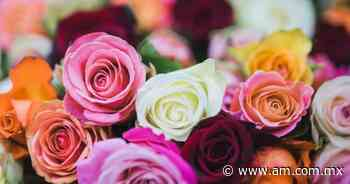 Regalos para el Día del Padre: ¿rosas para regalar? - Periódico AM
