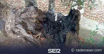 Intentan destruir con fuego los olivos centenarios del Papa y la Virgen de la Cabeza en Carboneros - Cadena SER