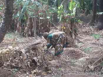 Govt negligence, herdsmen, climate change crippling farming in Anambra | International Centre for Investigative Reporting - Internatinal Centre For Investigative Reporting
