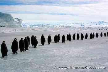La France recoit pendant dix jours la 43eme Reunion consultative du traite sur l�Antarctique (par RiskAssur, le magazine des Risques et des Assurances) - RiskAssur-Hebdo.com