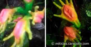 Hombre asegura haber encontrado una planta con forma de manos en Caldas, pero la realidad es otra - Noticias Caracol