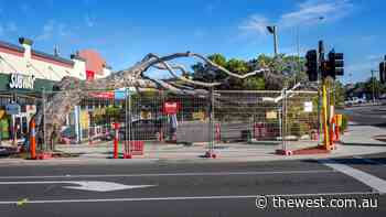 Permanent support for iconic cyclone-damaged Geraldton tree - The West Australian