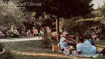 CASTELPLANIO / Merenda nell'Oliveta, viaggio tra storia e olivicoltura (video) - QDM Notizie