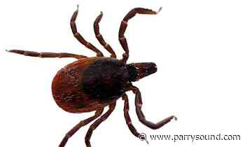 Contributed Ticks in North Bay, Parry Sound test positive for Lyme Disease - parrysound.com