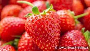 Niagara-On-The-Lake's Senior Strawberry Social Afternoon Tea returns in a new format - Newstalk 610 CKTB (iHeartRadio)