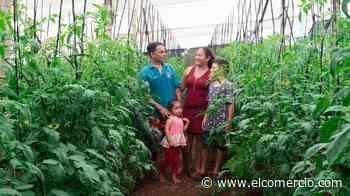La agroecología aporta a la conservación en la isla San Cristóbal - El Comercio - El Comercio (Ecuador)
