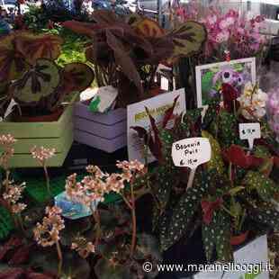 Maranello in fiore trasforma piazza Libertà in un giardino fiorito - MaranelloOggi