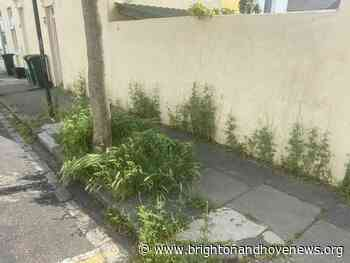 Councillors raise safety concerns as weeds overrun pavements - Brighton and Hove News