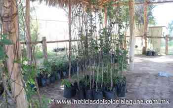 En San Pedro se mantiene la 'adopción' de arbolitos - Noticias del Sol de la Laguna