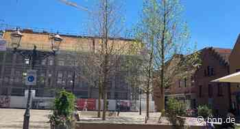 Warum welken die Platanen auf dem Neuen Markt in Ettlingen? - BNN - Badische Neueste Nachrichten
