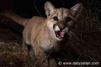 Remote cameras capture elusive animals around the world - Daily Sabah