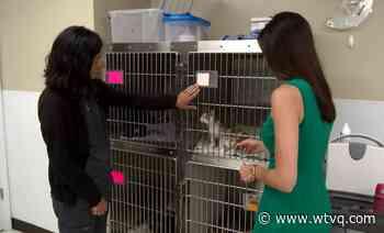 Hometown Hero: Veterinarian's caring for animals goes beyond 'work' - ABC 36 News - WTVQ
