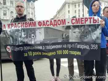 Kharkivites Protest Against Mass Killing of Animals - Kharkiv Observer