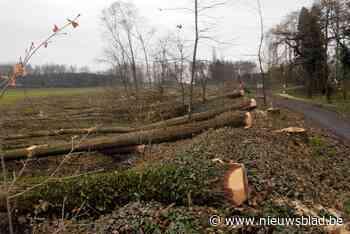 Open VLD wil drie hectare toegankelijk bos rond Beerkaai behouden - Het Nieuwsblad