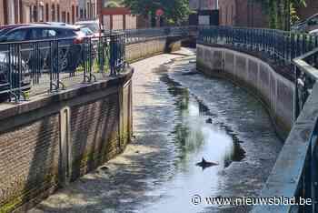 """Bewoners ongerust over plots drooggelegde rivier: """"Vissen ge... (Tienen) - Het Nieuwsblad"""
