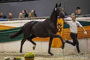 Drie tienen en recordscore voor Trakehner-merrie Salvana's Helena - Horses.nl