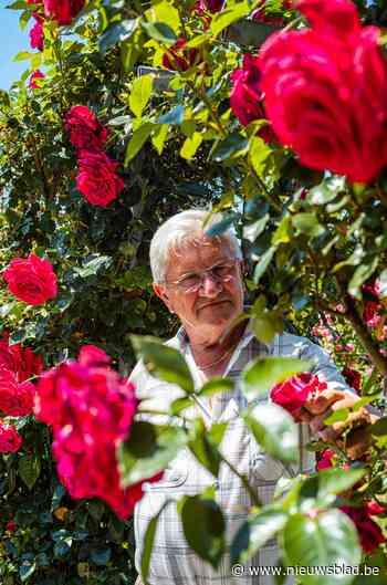 Truiense rozen in topconditie door koud en nat voorjaar