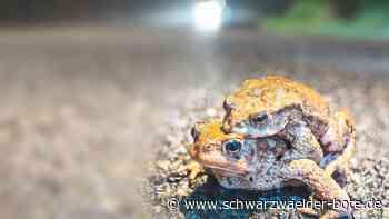 Traurige Bilanz in Calw: Amphibienbestand bricht dramatisch ein