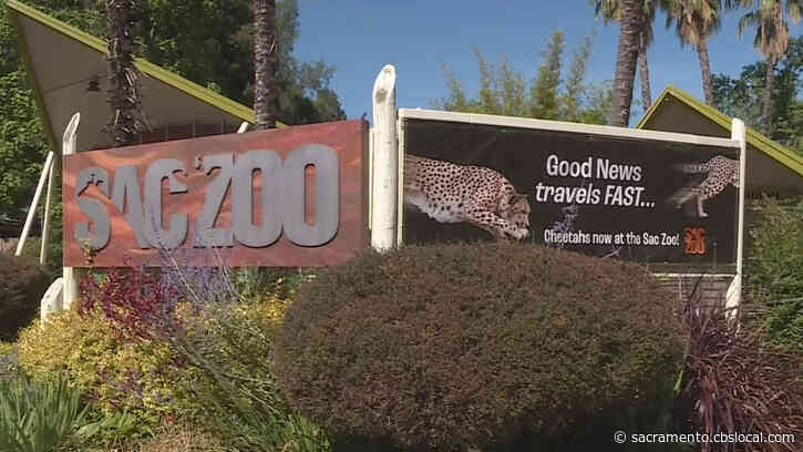 Sacramento Zoo Enforces Early Closures As Heatwave Hits Valley