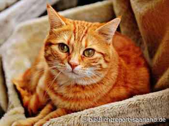 Verdacht der Tierquälerei einer Katze in Kirkel-Limbach - Blaulichtreport-Saarland