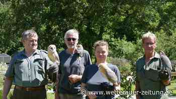 Leinenpflicht gilt auch für junge Greifvögel in der Wetterau - Wetterauer Zeitung