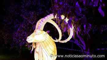 Cultura Porto 'Magical Garden'. Jardim Botânico do Porto recebe experiência imersiva - Notícias ao Minuto
