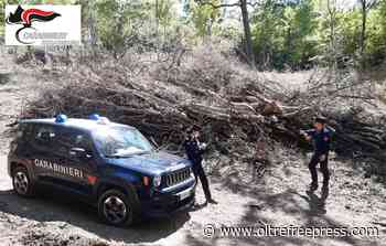 Aliano: I Carabinieri Forestali di Stigliano, Tursi e Rotondella sequestrano un'area boscata comunale - Oltre Free Press