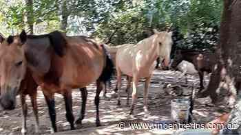 Una familia de Concordia denunció el robo de tres caballos - UNO Entre Rios
