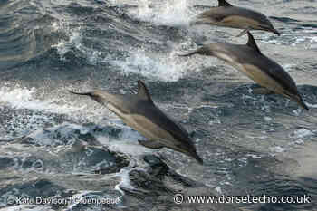 Fishing along Dorset coastline to be patrolled by new Greenpeace ship - Dorset Echo