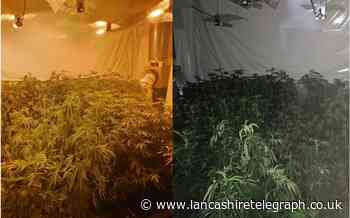 Two cannabis grows discovered by police while investigating violent disorder incidents