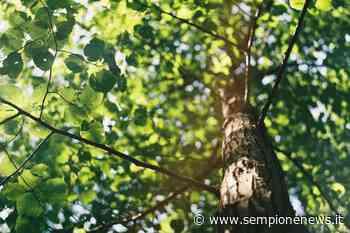 Legnano, un bosco dedicato alle vittime di Covid-19 e un'area per Alda Merini - Sempione News
