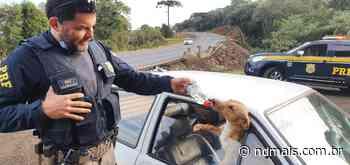 Policiais socorrem cachorros trancados em carro após acidente em Faxinal dos Guedes - ND Mais