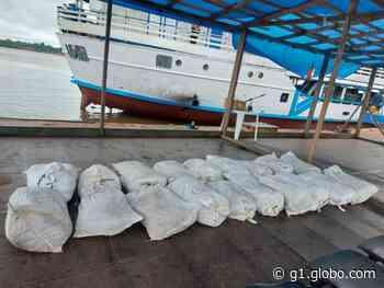 Polícia apreende mais de 800 quilos de pescado ilegal em Coari, no AM - G1