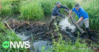 """Beverdammen in Tremelo verlaagd om wateroverlast te vermijden: """"minimale invloed voor de bevers"""" - VRT NWS"""