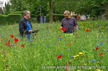 Insektenfreundliche Kommune: Weissach lässt das Gras wachsen - Weissach - Leonberger Kreiszeitung