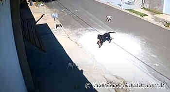Homem mata cachorro a tiros após animal invadir sua residência em Botucatu | Jornal Acontece Botucatu - Acontece Botucatu